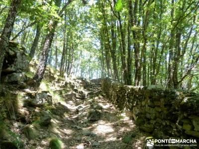 Pinares Navaluenga; senderismo guadalajara;mochila trekking;excursiones por madrid;los senderos